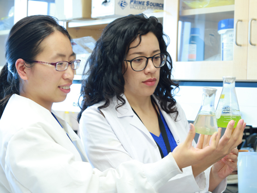 Xin Hu and Yulie Meneses examine the effect of algae treatment on nutrient removal from food processing wastewater.