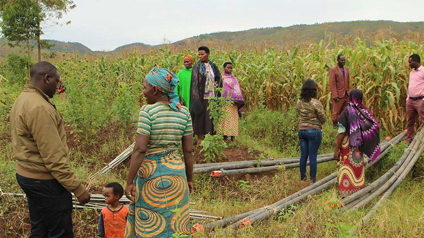 People in Rwanda irrigating smallholder agriculture crops
